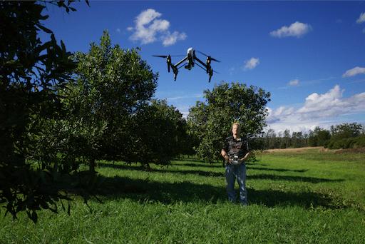 Drones in Macadamia Heaven